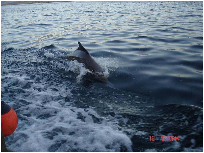 Dolphin (15).jpg