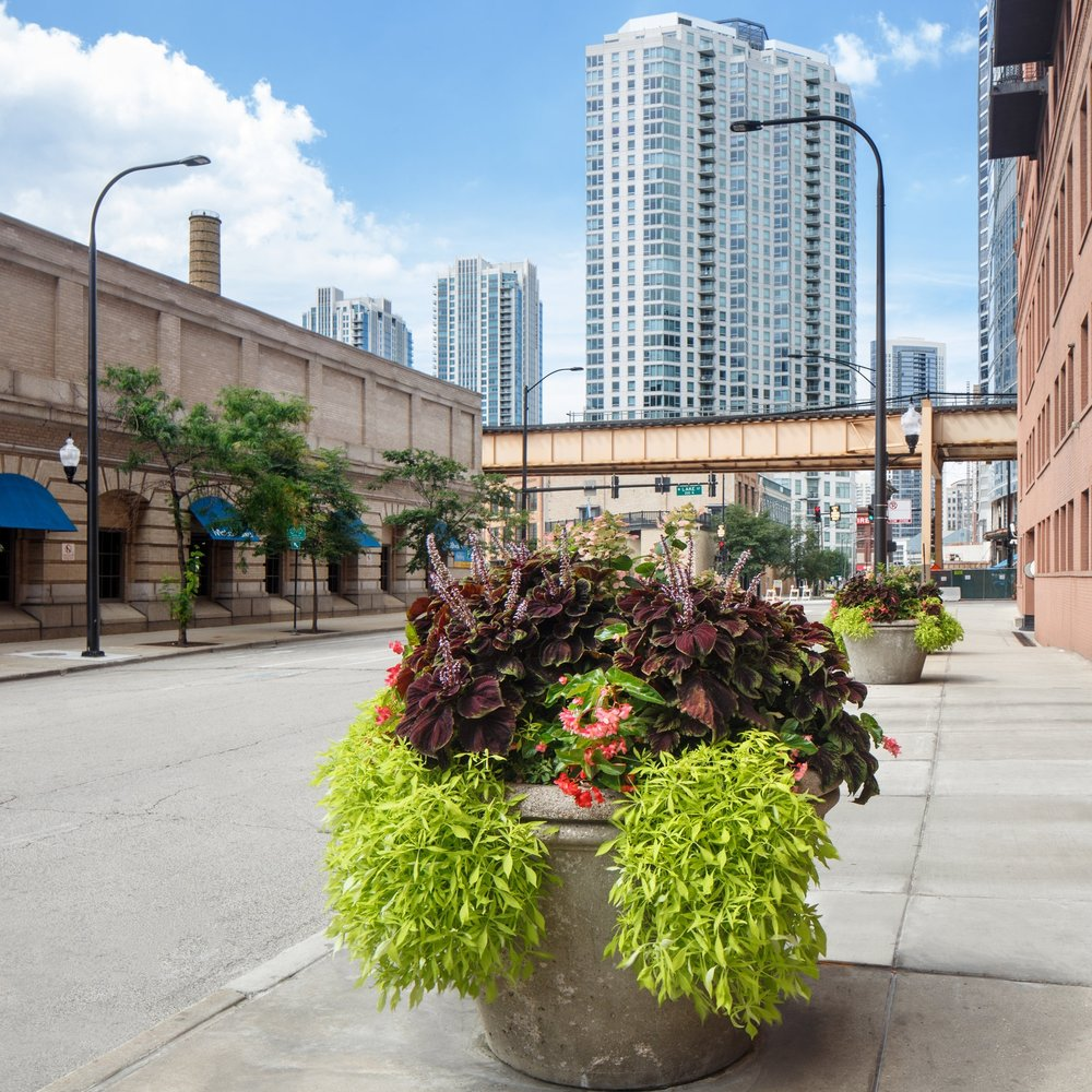 CANAL STREET  Landscape Enhancements  Chicago, Illinois