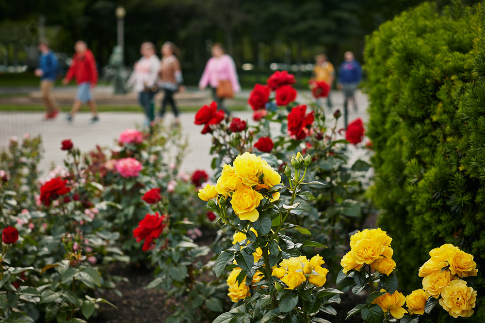 013_Christy_Webber_Rose_Garden_MG_2841.jpg