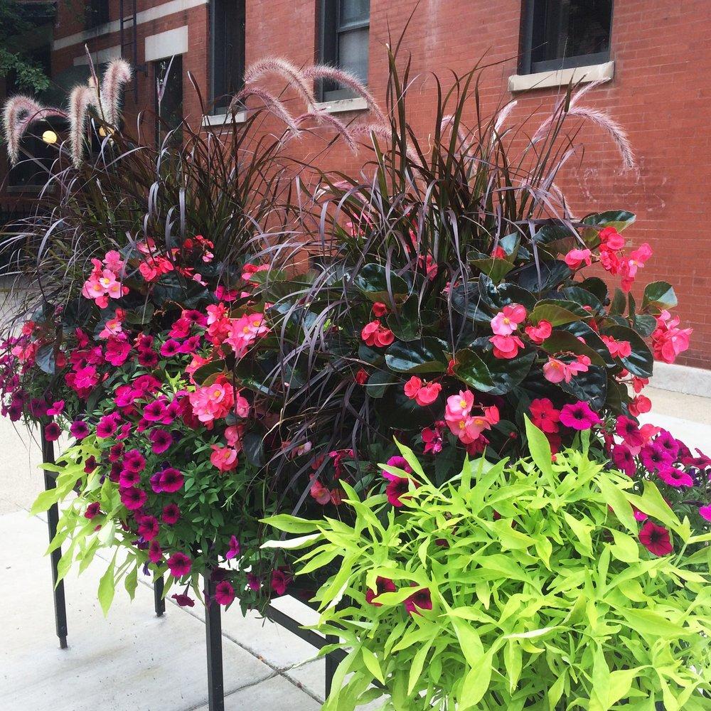 SHEFFIELD NEIGHBORS  Landscape Enhancements   Chicago, Illinois