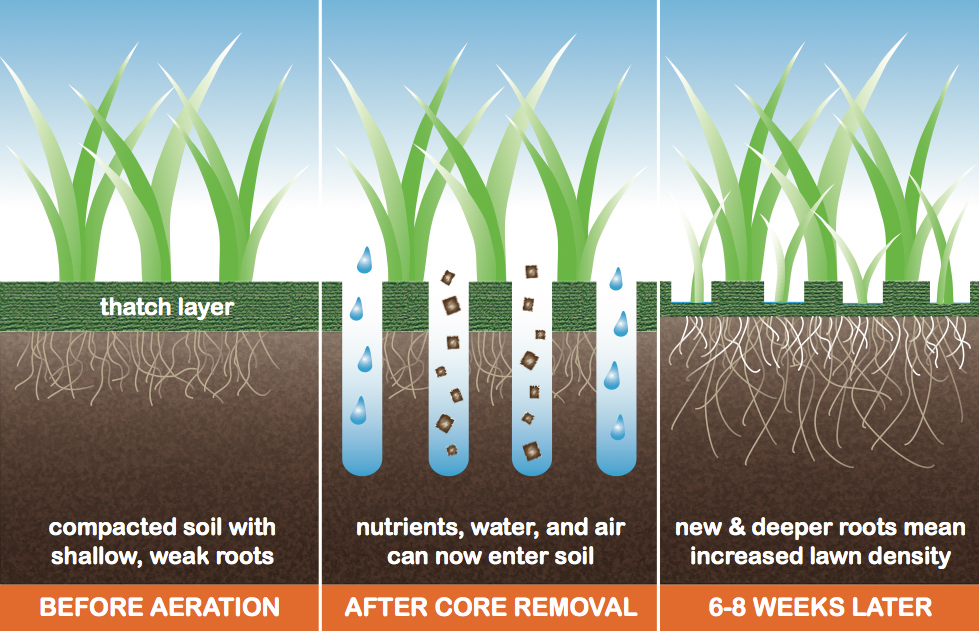 Lawn-aeration-before-after.jpg
