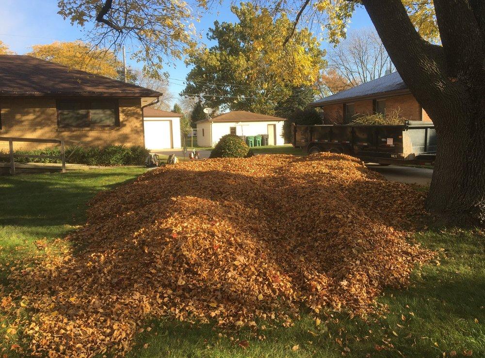 Gma leaves.jpg
