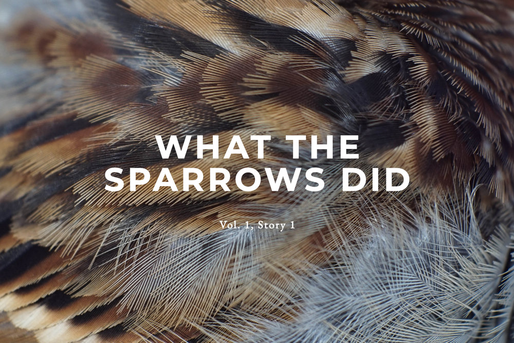 Tumblr Title - What the Sparrows Did.jpg