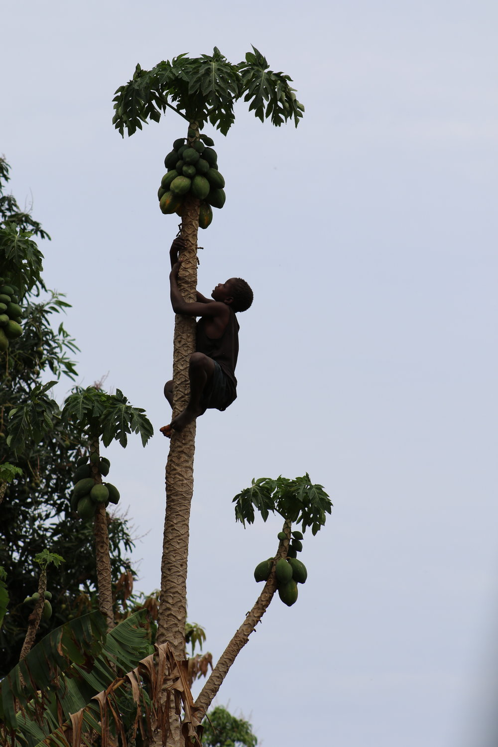 In one village, the team and I watched mesmerized as this child climbed a papaya tree with no supporting branches or ropes. When he got to the top, he got his papaya and we got a happy thumbs-up from this skilled climber.