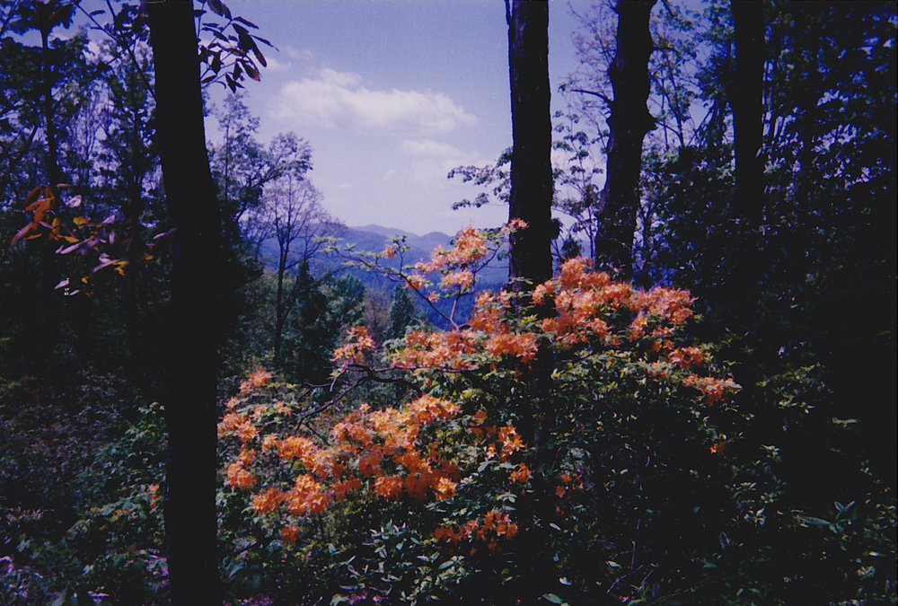 View at Tao Mountain Sanctuary, early 2000s