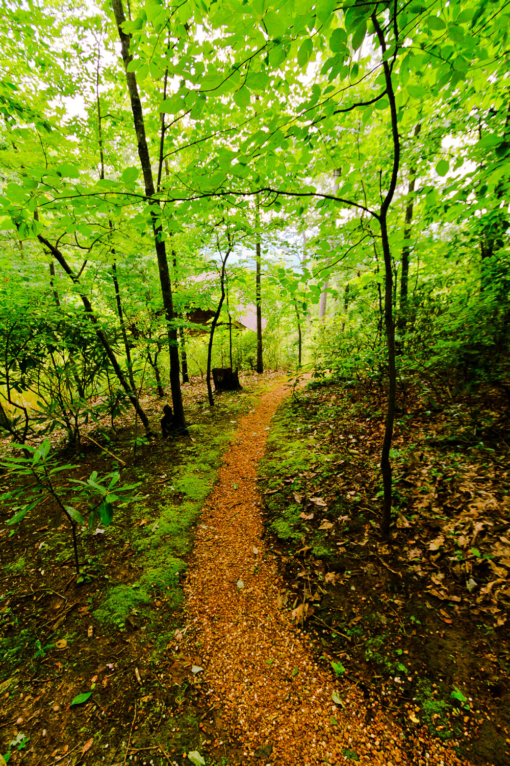 Trail at Tao Mountain Sanctuary