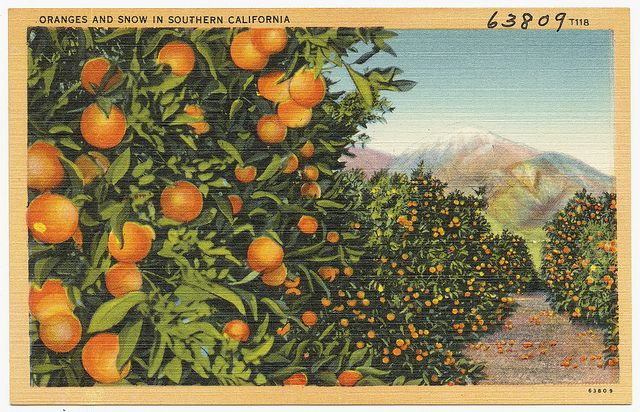 "- ""Well actually in Redlands a lot of the houses were in orange groves. They were surrounded by orange trees and that was magnificent to me. I love the towering palm trees. It was all new because I had never seen anything like that until I came to California."""