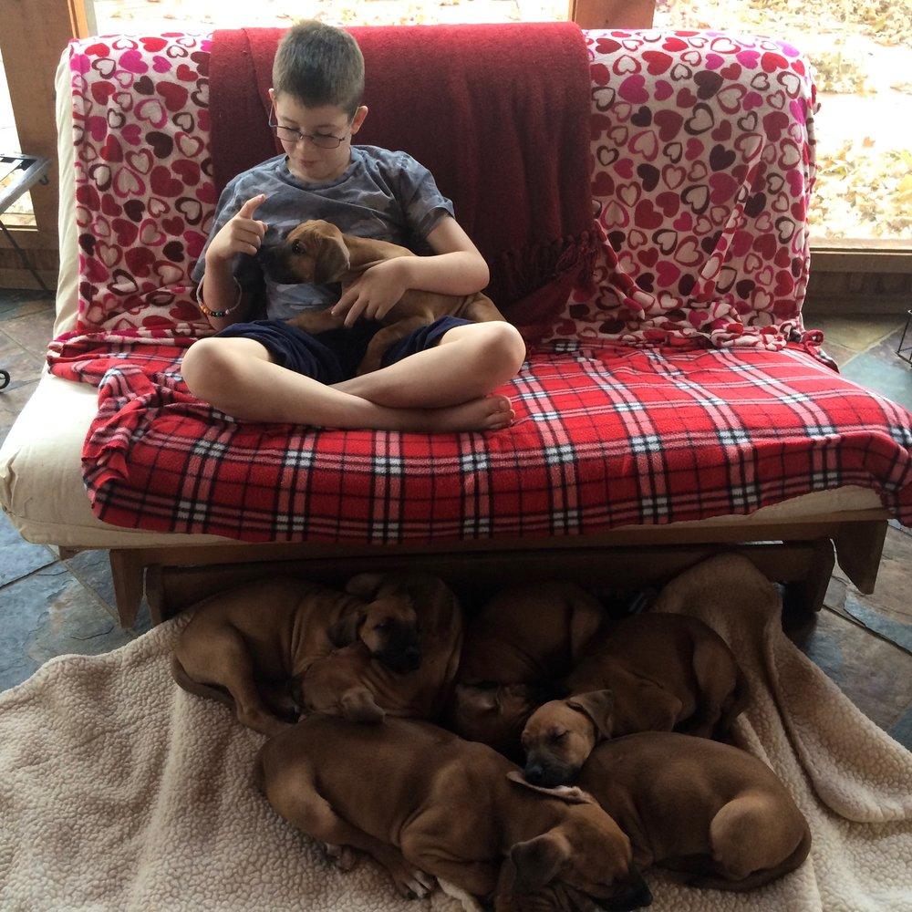 Master Sam Mask  Puppy Whisperer Teaching Attention.jpg