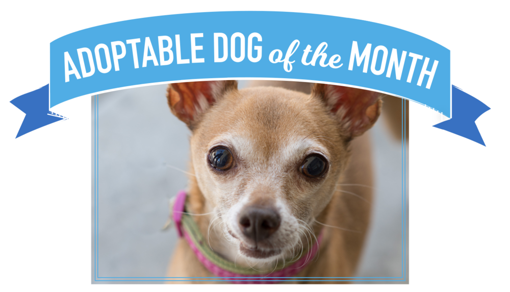 Dog of the Month_Website.png