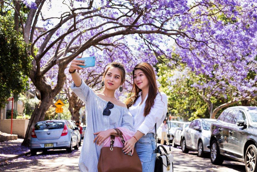 Jacaranda Sydney