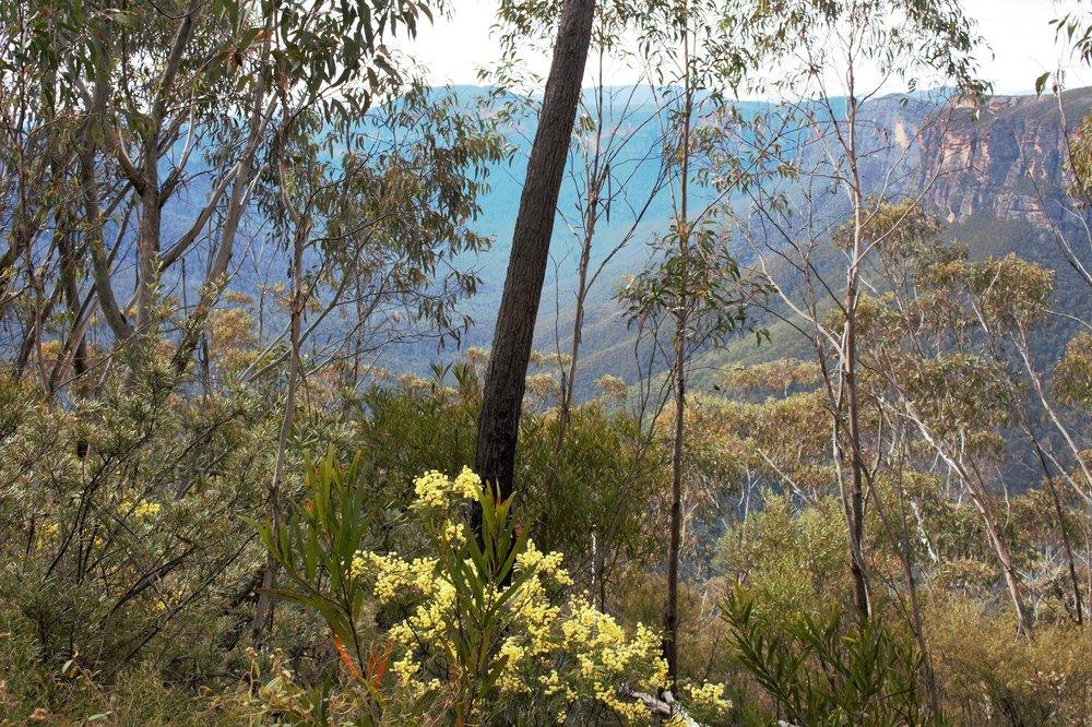 Blue Mountains bushland