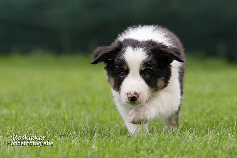 Puppy Development -