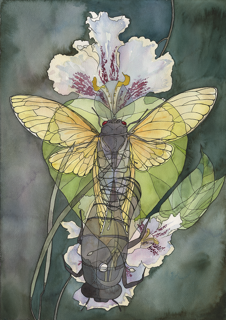 Magicicada tredecassini x Catalpa bignonioides, (2018). Ink and watercolor on paper.