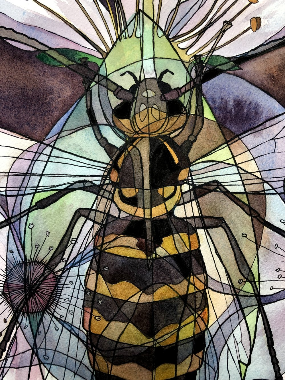 "Detail of ""Wasp x Plum"" (Vespula vulgaris x Prunus spinata). Ink and watercolor on paper."