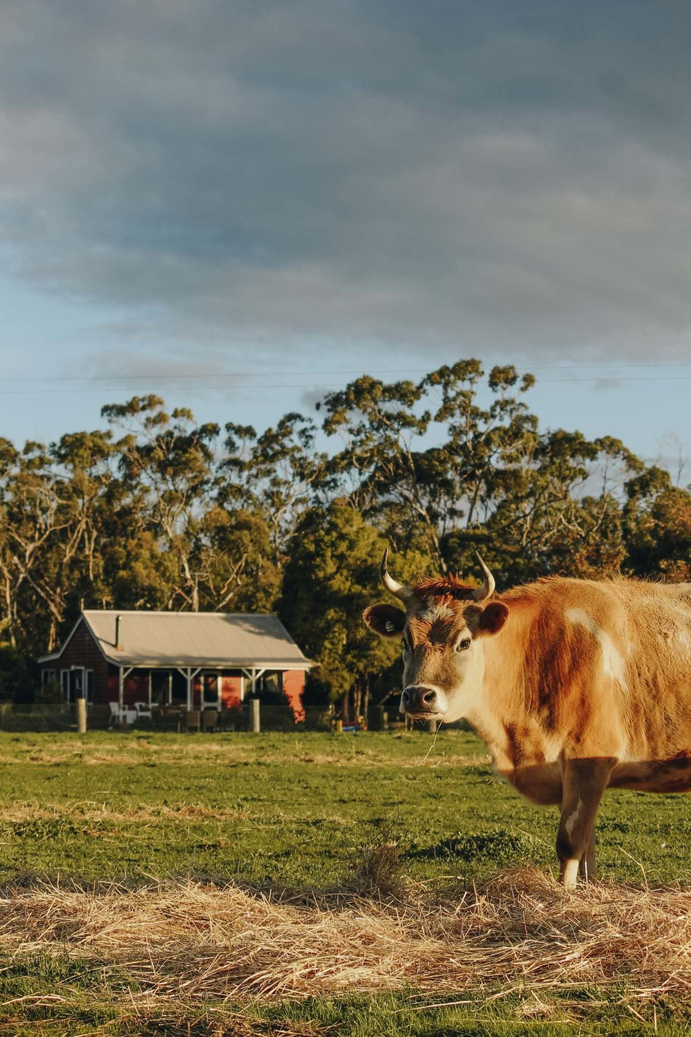 Freshwater Creek Cottages - Family Farm Stay - Surf Coast - Great Ocean Road - Vicotria - Accomodation_-26.jpg