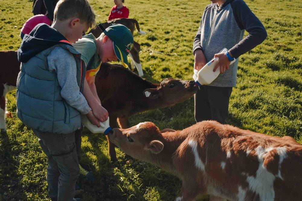Freshwater Creek Cottages Kids Farm Tours