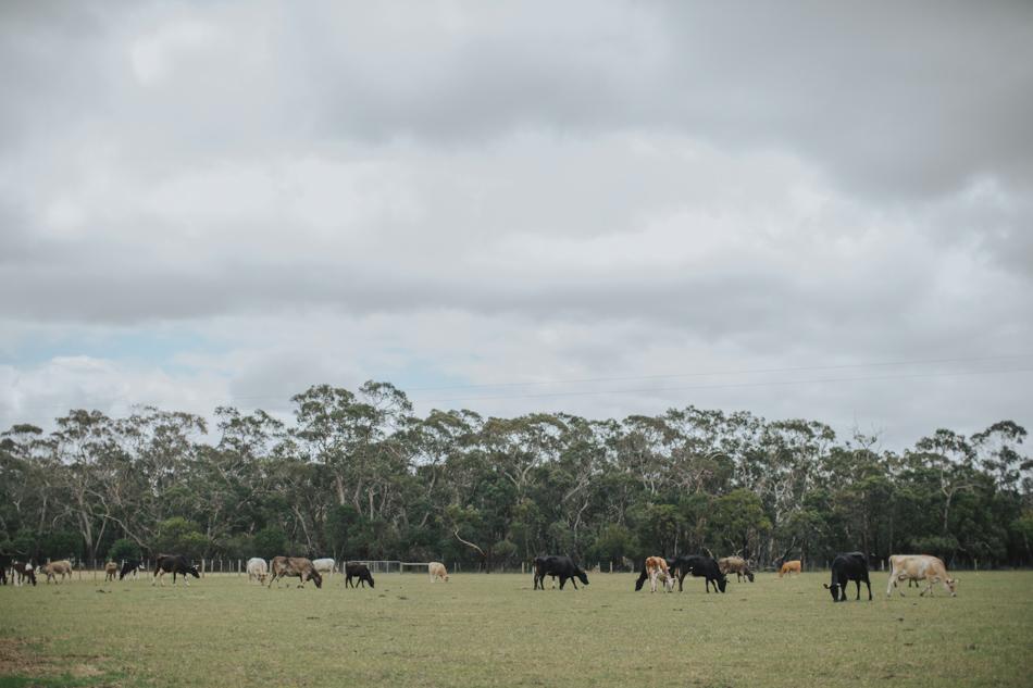 Freshwater_Creek_Cottages_Australian-rustic-farm-Wedding-9.jpg