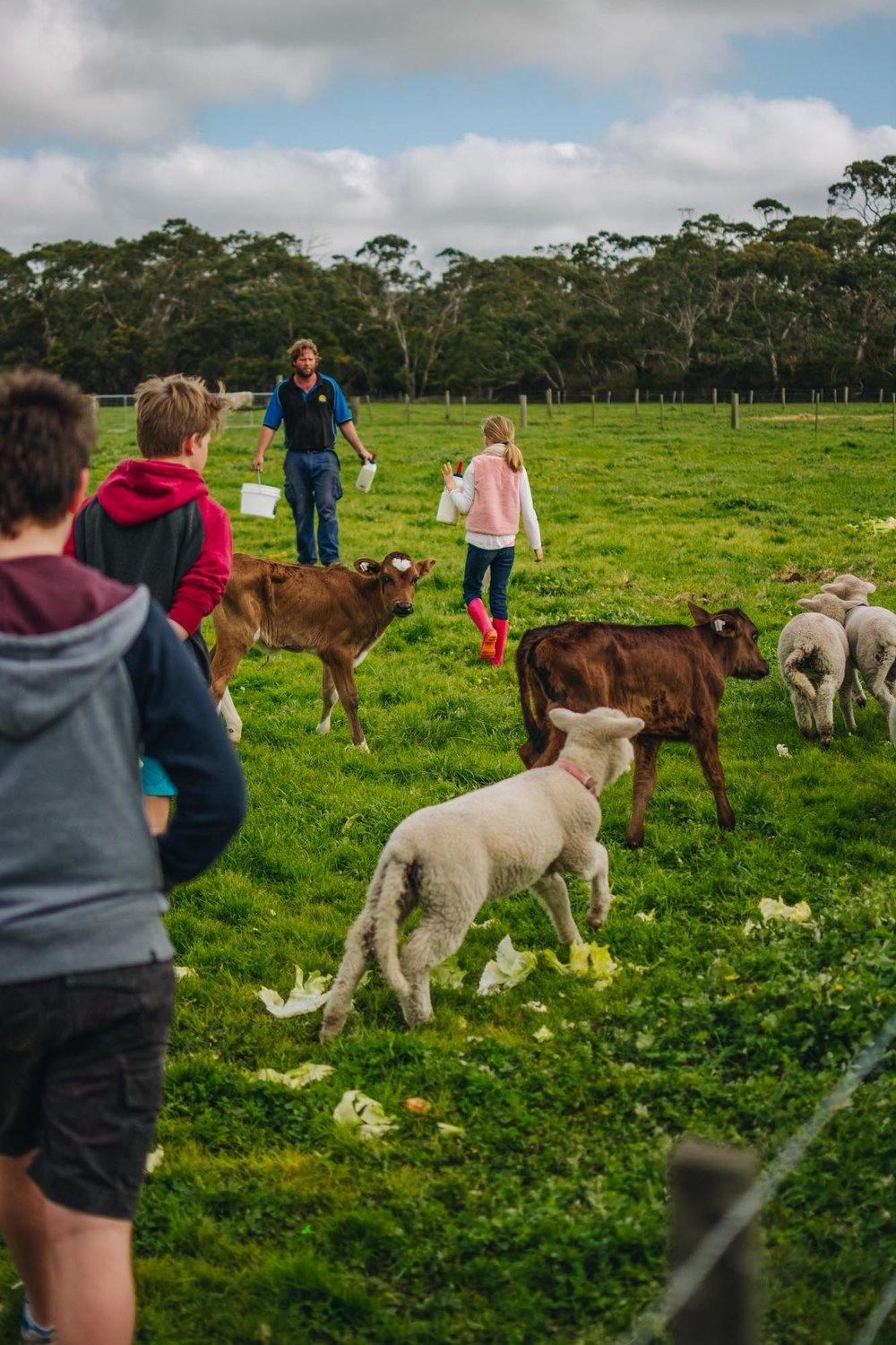 Freshwater Creek Cottages - Kids Farm Tours - Kids Parties - Surf Coast - Torquay - Geelong-106.jpg