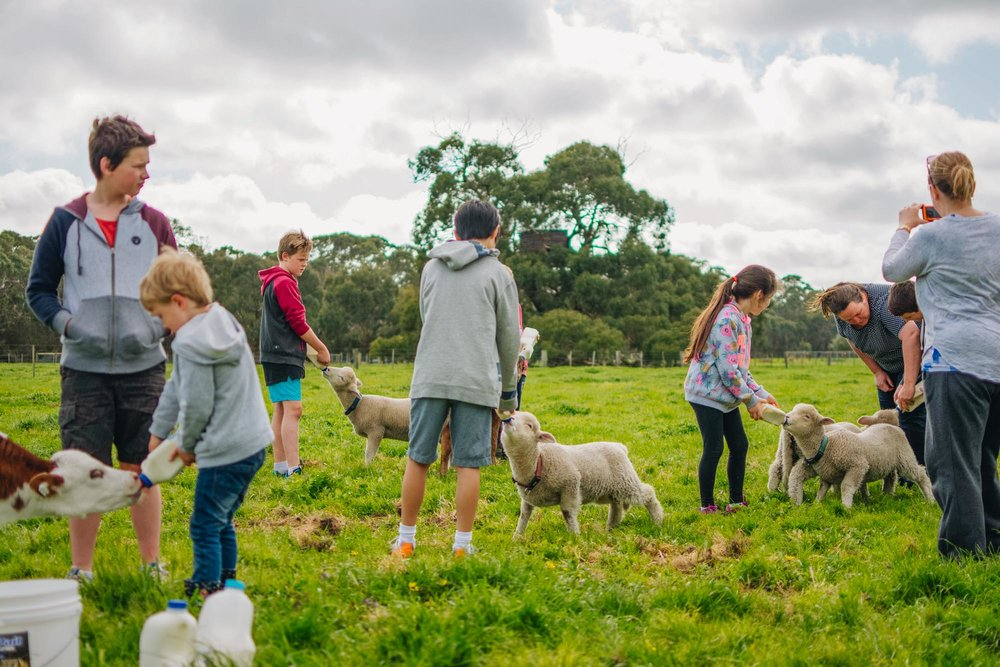 Freshwater Creek Cottages - Kids Farm Tours - Kids Parties - Surf Coast - Torquay - Geelong-108.jpg