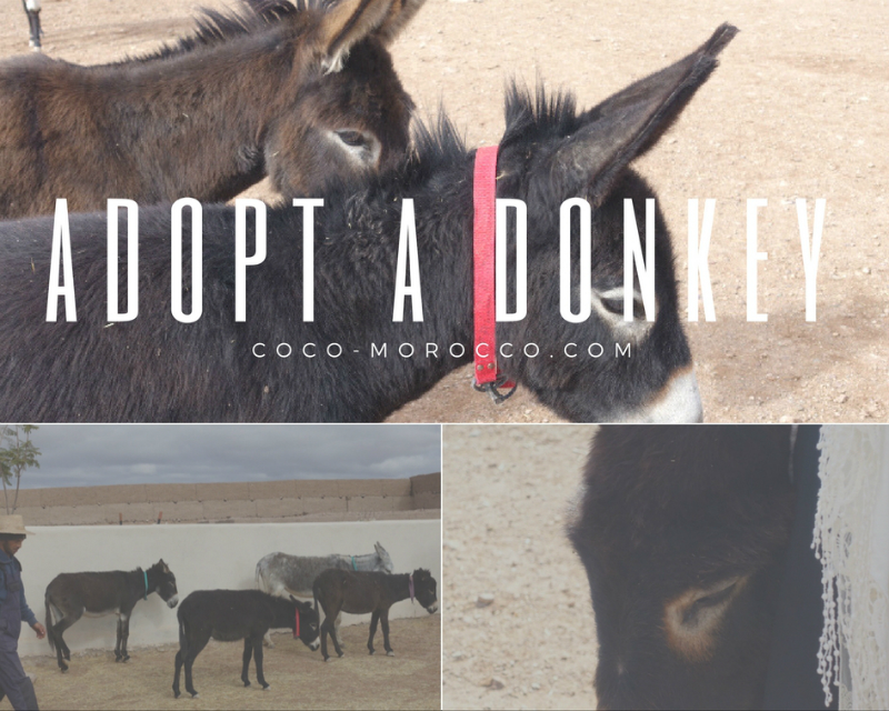 Jarjeer mules, marrakech
