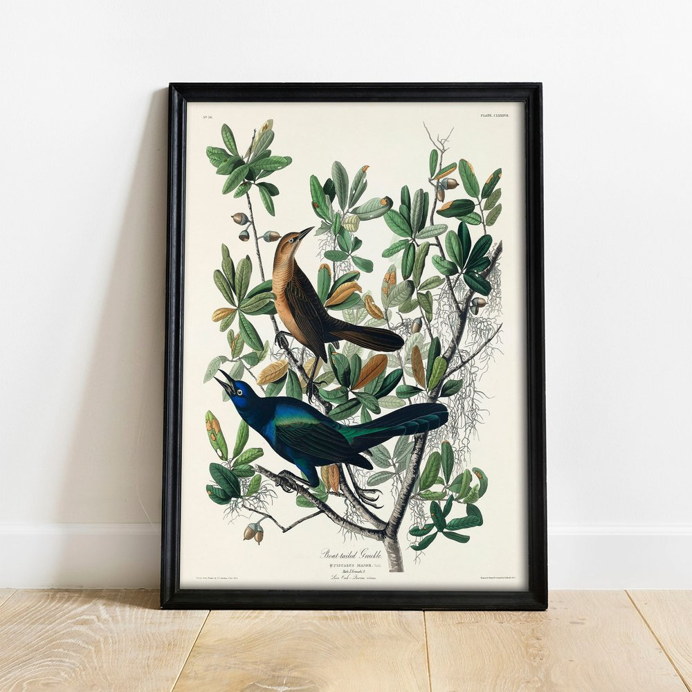 Boat-tailed Grackle, $16  —VintagoCo, Etsy