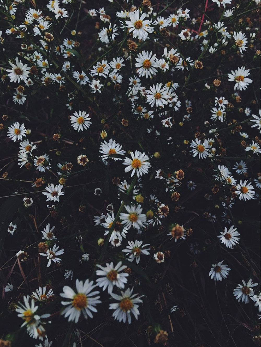 Let A Thousand Distributed Flower Factories Bloom, $120  —Lani Trock, Tappan Collective