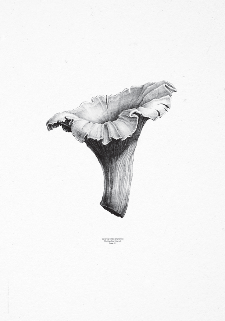 1:1 Chanterelle, €49  —Form Us With Love, Paper Collective