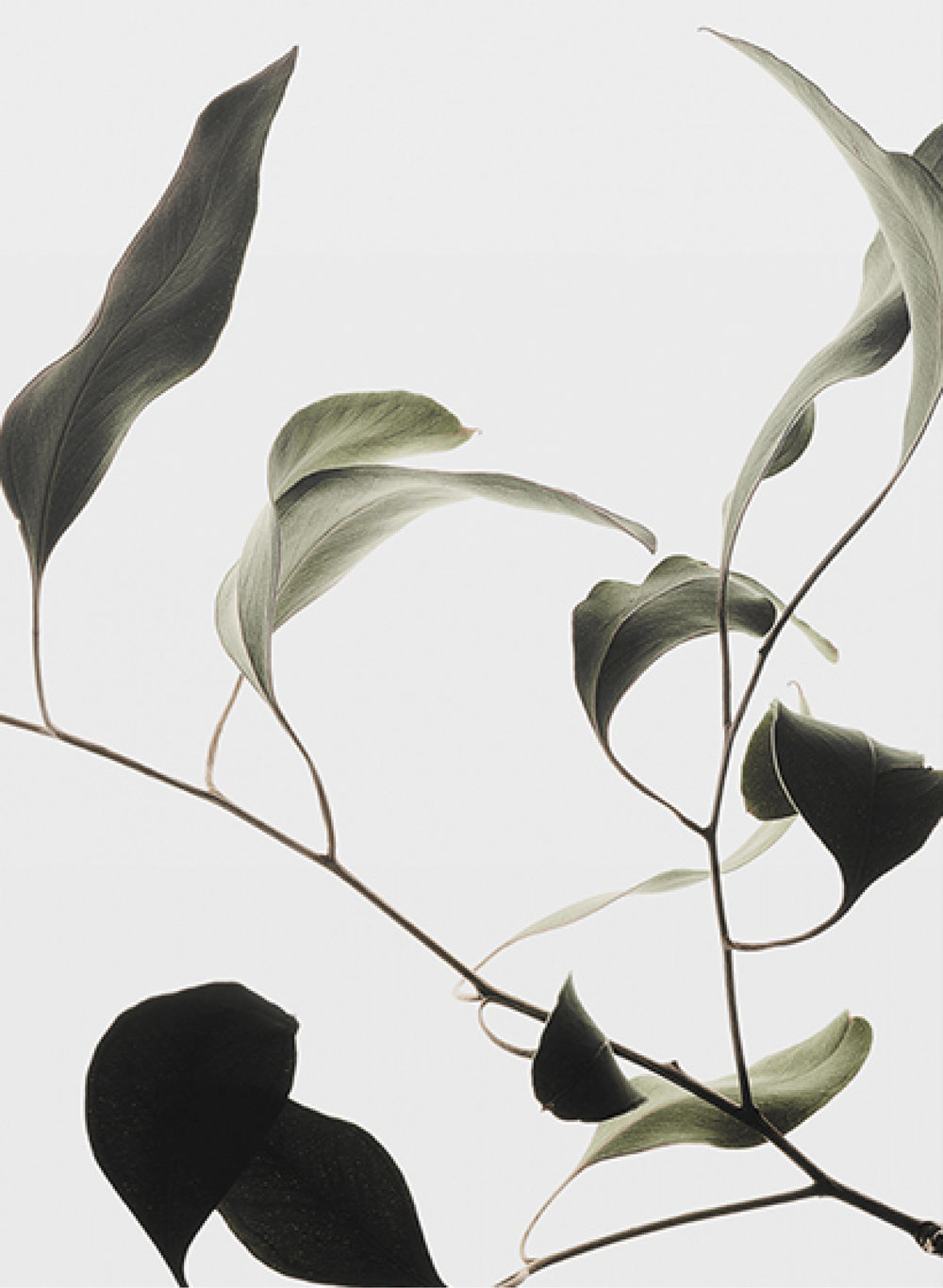 Floating Leaves 09, $40  —Norm Architects, Finnish Design Shop