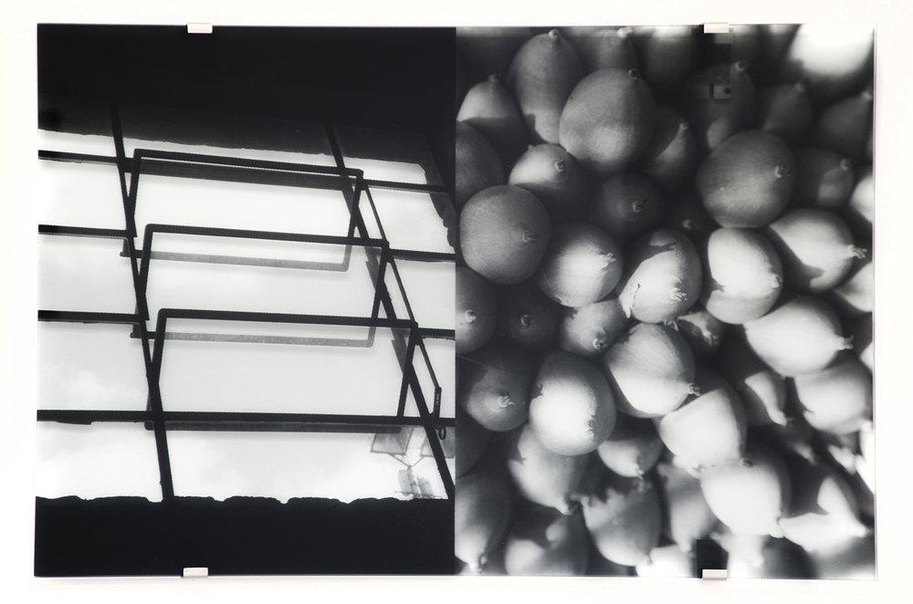 Sesc Pompéia, Ceiba Pentandra , 2016 transparent silkscreen on glass 27-1/2 x 41-3/8 inches,70 x 105 cm Edition of 5