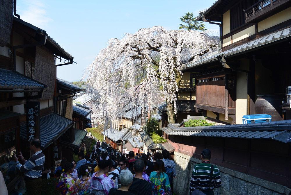 Day 10: Kyoto!