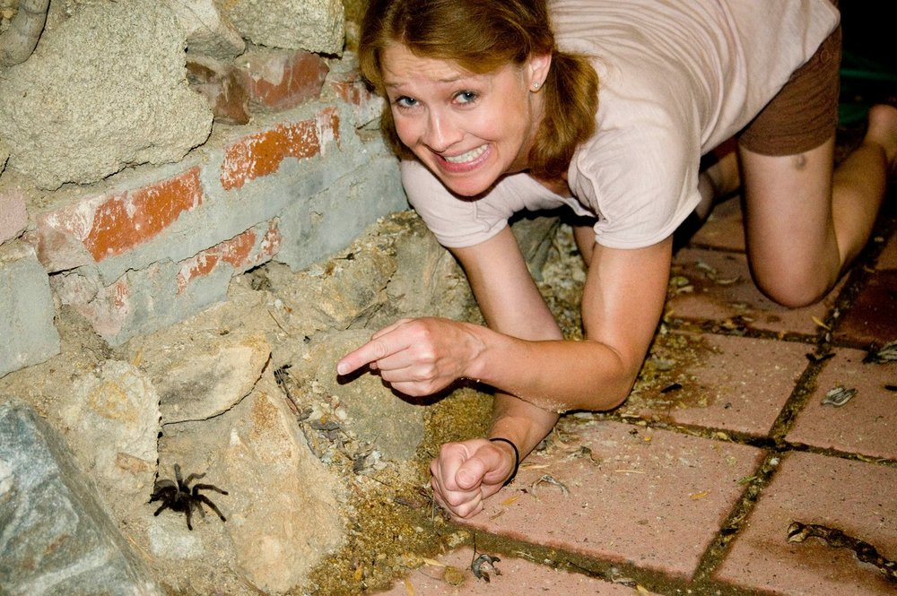 Lois the Tarantula in Shadow Hills, Ca.