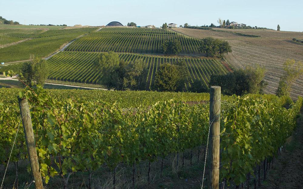 Carapace Winery Fields.jpg