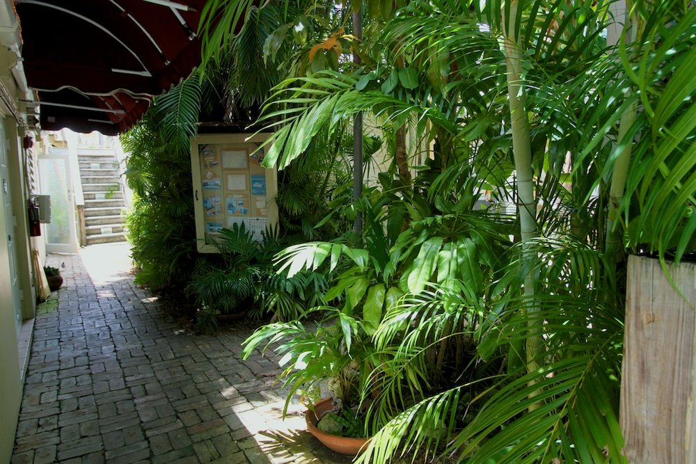 interior of the courtyard. lush greenery.