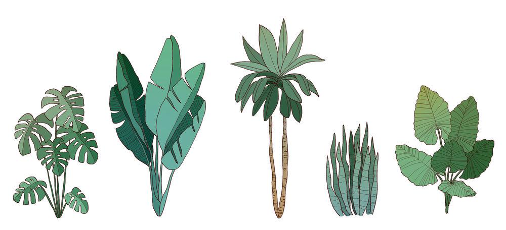 TropicalPlantSketches.jpg