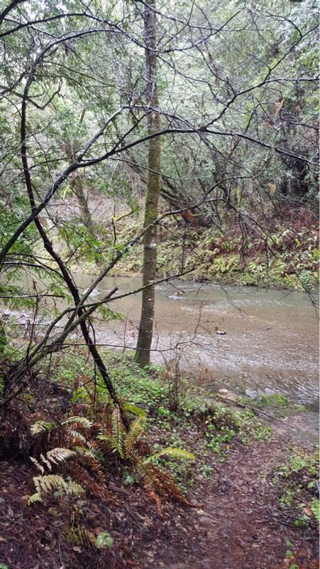 Lagunitas-Creek-at-Samuel-P.-Taylor-State-Park.2png.jpg