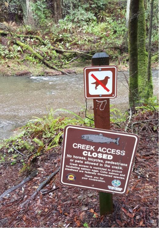 Lagunitas-Creek-at-Samuel-P.-Taylor-State-Park.jpg