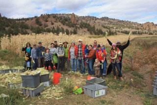 Group-Gleaning-Corn.jpg