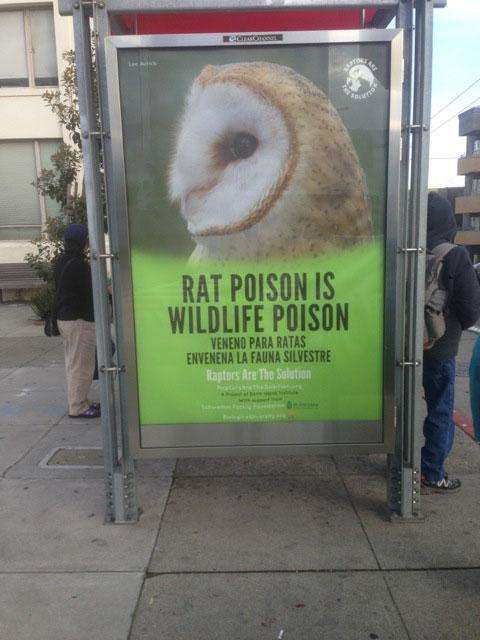 RATS-in-SF-avenues.jpg