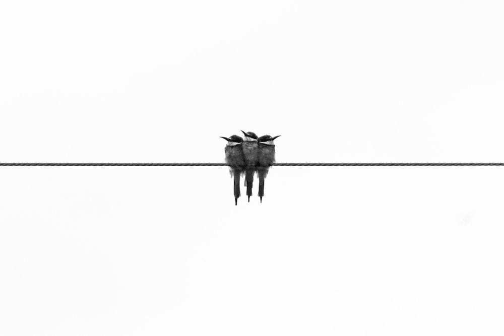 birdsonwire.jpg