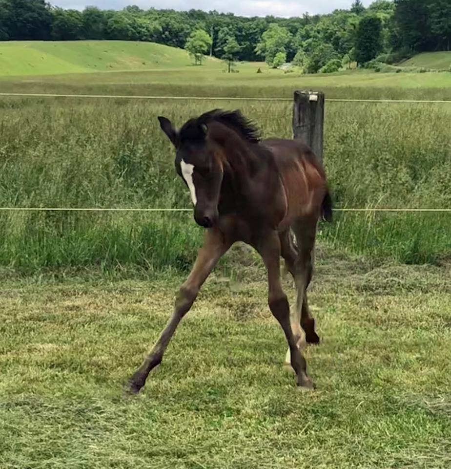 2018 colt out of Dancing Gracefully and by Well Said