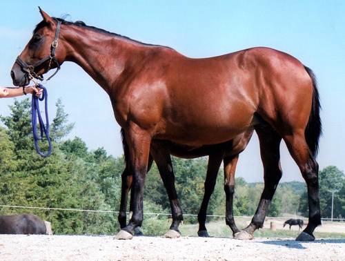 Frisk Me Minnie - 16.1 hand 2001 TB mare. Sired by Frisk Me Now and out of Kroneh.