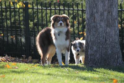 Roxy's Past Pupsbeing loved bySteve & Reneein Colorado -