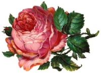 vintage-rose-free-clipart-1.jpg