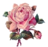 10b2bbf830cfd595f4bb24a048eab3d1_victorian-rose-drawing-clipartxtras-victorian-rose-drawing_340-270.jpeg