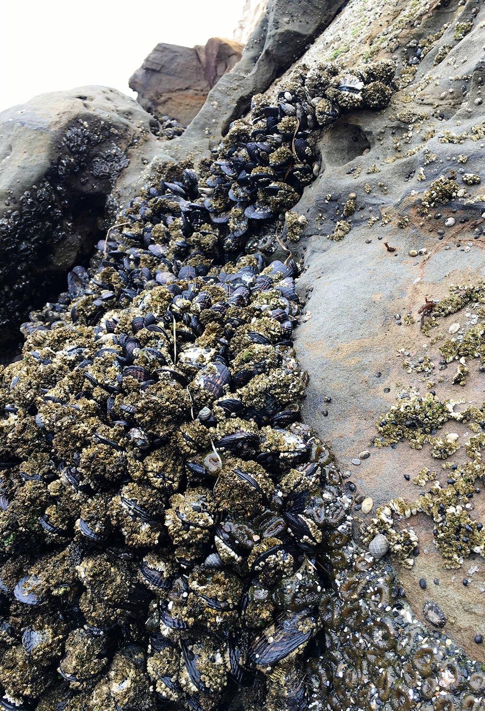 Cape Kiwanda at low tide, Pacific City, Oregon
