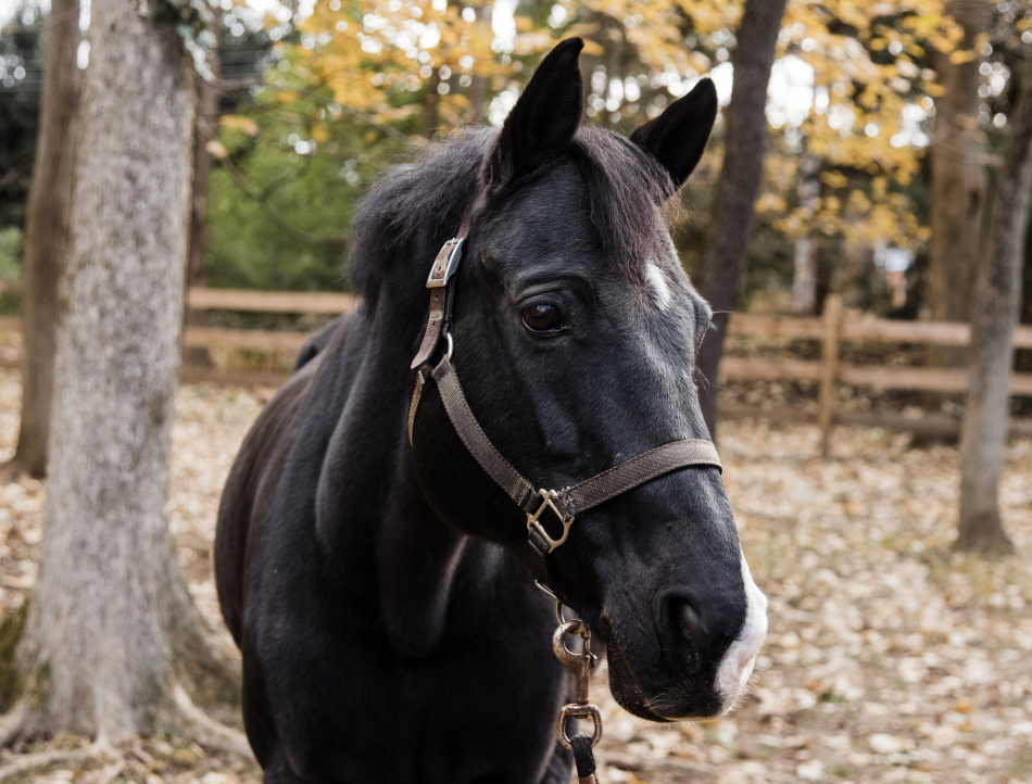 Pompi is a retired dressage horse. The discipline requires fluid and balanced movement, which makes Pompi a uniquely valuable member of our herd.