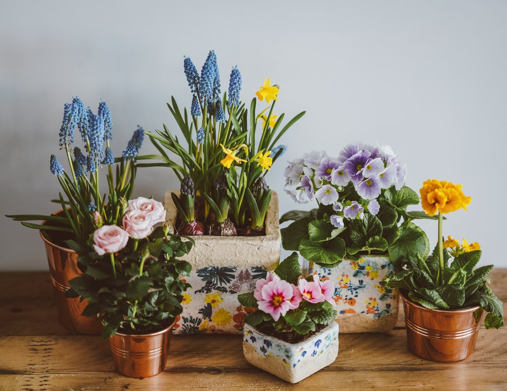 Indoor Gardening Workshop - Create green space no matter where you are