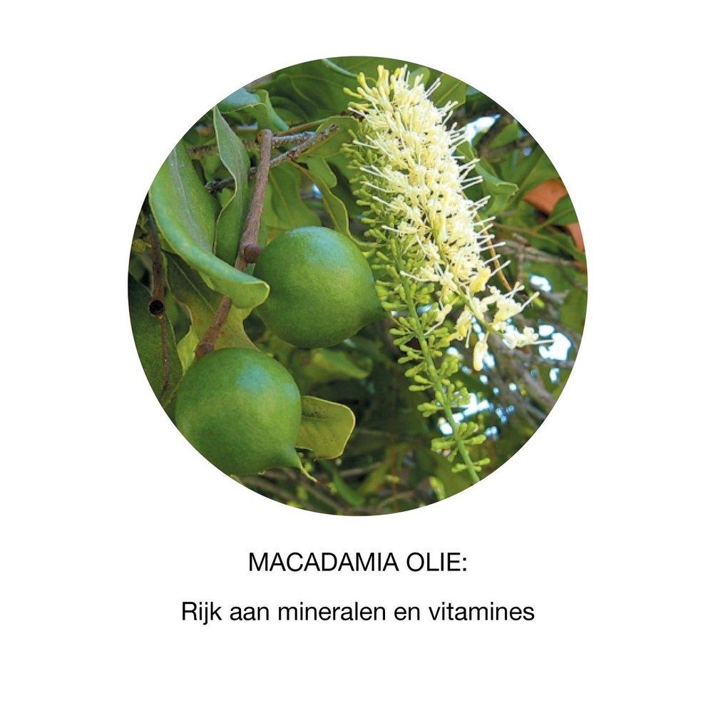 Argan+en+Macadamia.jpg