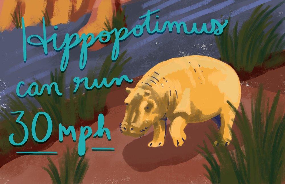 hippo.facts.jpg