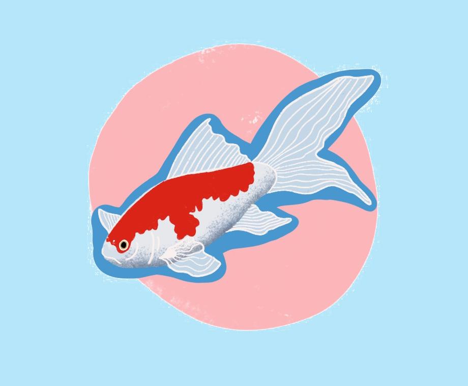 goldfish copy.jpg